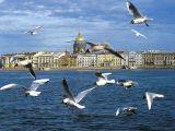 Рынок недвижимости в Санкт-Петербурге