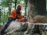 Новая серия профессиональных бензопил Husqvarna пополнилась моделью для валки больших деревьев
