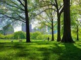 Городские экосистемы